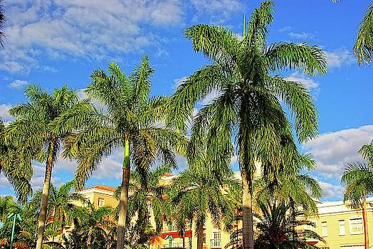 Glorious Palms by Zal Latzkovich