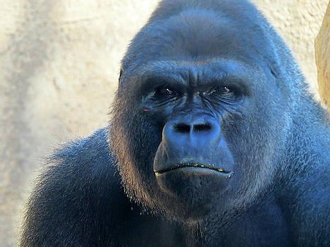 Gorilla by Lea Cox