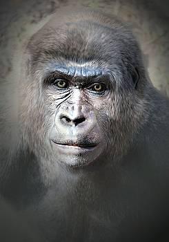 Gorilla portrait  by Savannah Gibbs