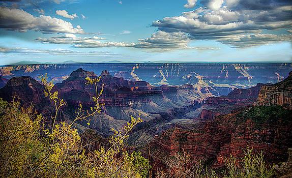 Grand Canyon - North Rim by Jennifer Stackpole