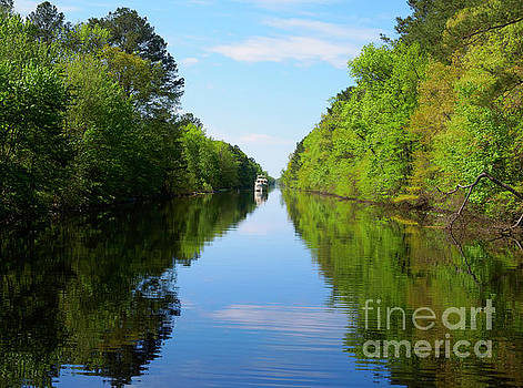 Great Dismal Swamp Canal in spring by Louise Heusinkveld