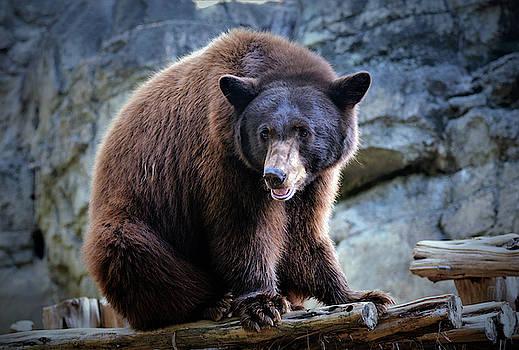 Grizzly Bear by Savannah Gibbs