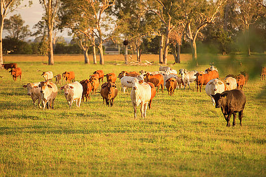 Group of cows by Rob D Imagery