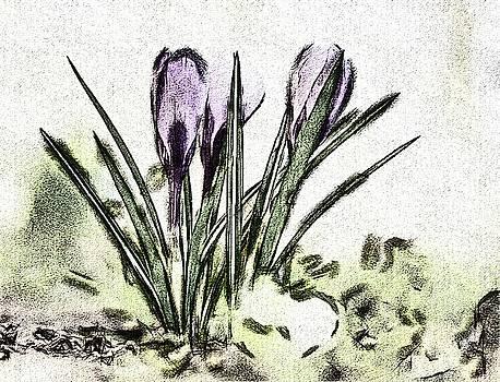 Herald Of Spring by Karl-Heinz Luepke