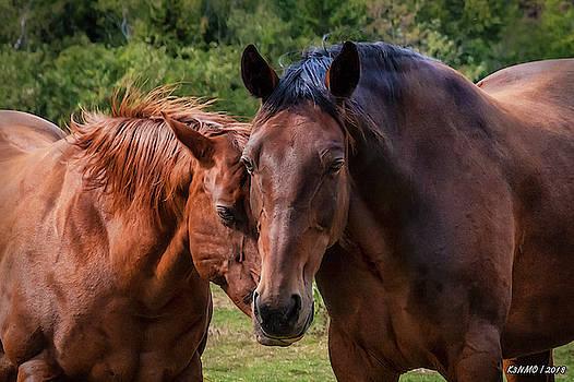 Horses on Pereau Rd by Ken Morris