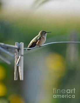 Hummingbird  by Deb Cawley