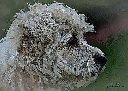 Jack Russell Terrier by Linda Burek