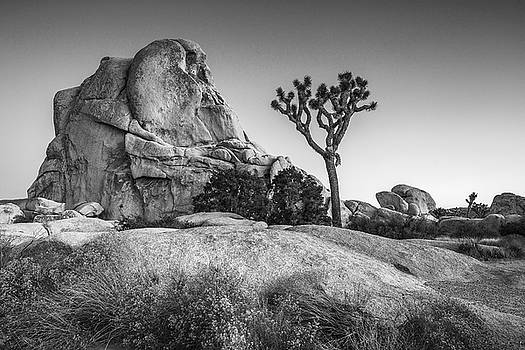 Joshua tree and Intersection rock by Davorin Mance