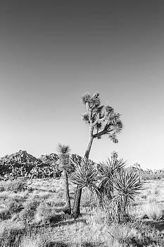 Melanie Viola - Joshua Tree National Park