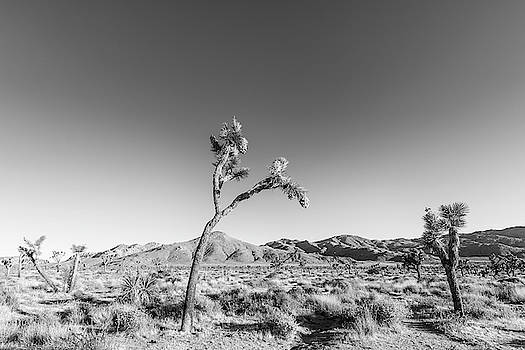 Melanie Viola - Joshua Tree National Park - Monochrome