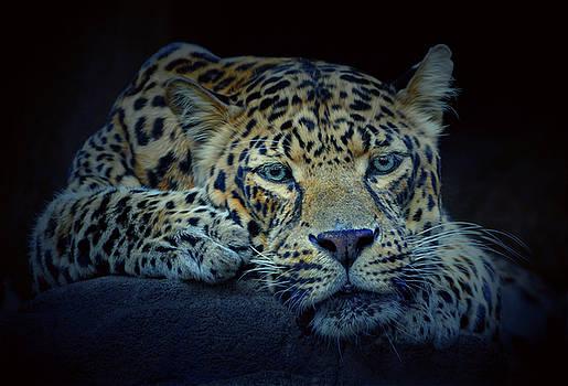 Leopard by Savannah Gibbs