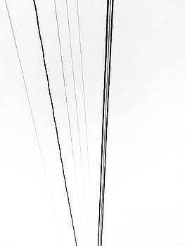 Lines by Fei A