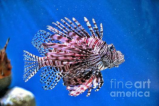 Lion Fish by SoxyGal Photography