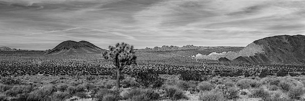 Lone Joshua Tree - Pleasant Valley by Peter Tellone
