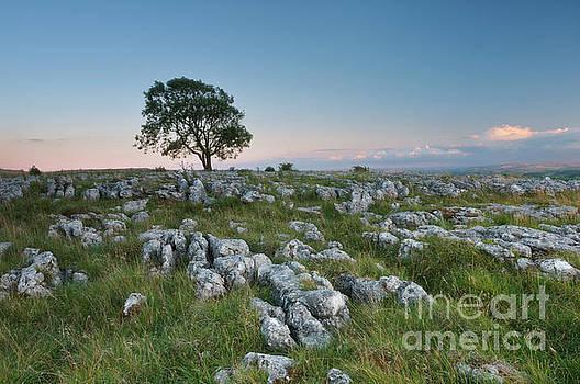 Mariusz Talarek - Lonely Tree on the Limestone Pavement