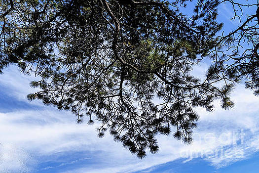 Looking Up by Carol Bilodeau