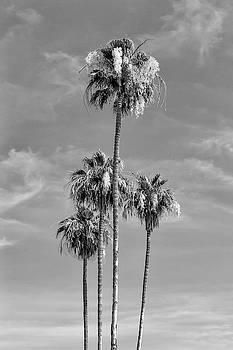 Melanie Viola - Lovely Palm Trees - monochrome