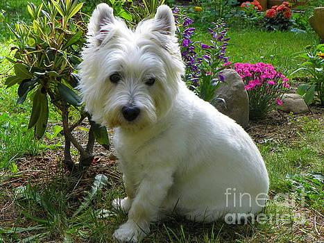 Miss Daisy In The Garden West Highland White Terrier by Art Sandi