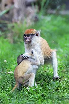 Monkey Business by David Stasiak