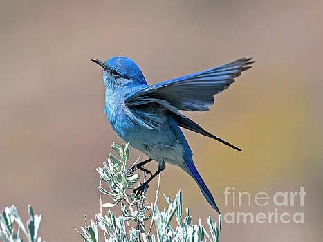 Mountain Blue Landing by Mike Dawson