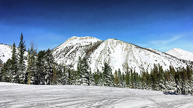 Mt. Rose by Maria Coulson