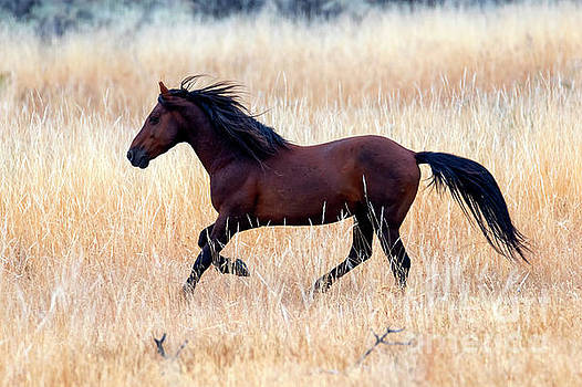 Mustang Gallop by Mike Dawson