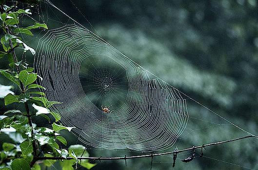 My Web by Paul Ross