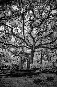 Oak Cemetary II by Jon Glaser