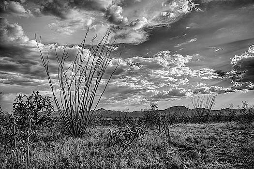 Chance Kafka - Ocotillo in Black and White