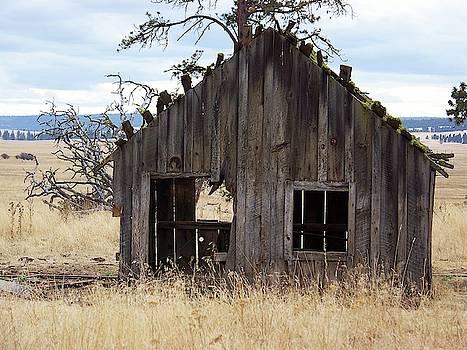 Old Homestead by Julie Rauscher
