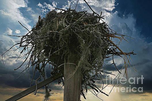 Dale Powell - Osprey Nest