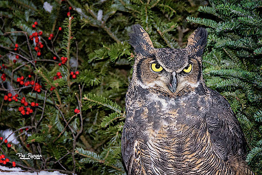 Owl in the Pines by Peg Runyan