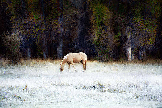 Palomino In Frosted Autumn Field by David Chasey