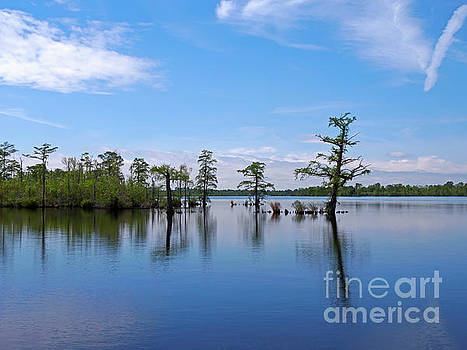 Pasquotank River North Carolina by Louise Heusinkveld