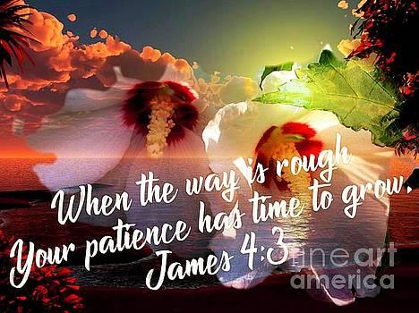 Patience  by Debra Lynch