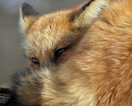 Peeking by Doris Potter