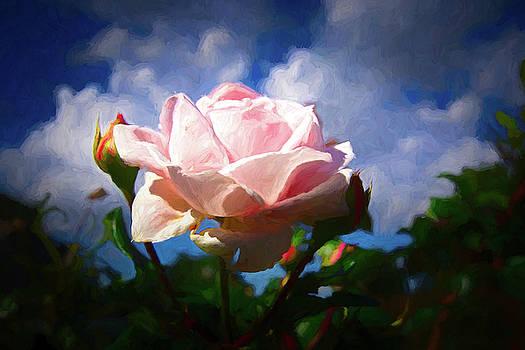 Pink Beauty by Ernie Echols