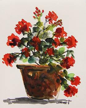Prize Geranium by John Williams