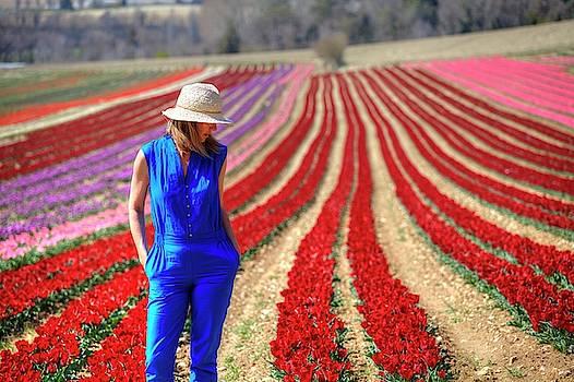 Provence by Karim SAARI