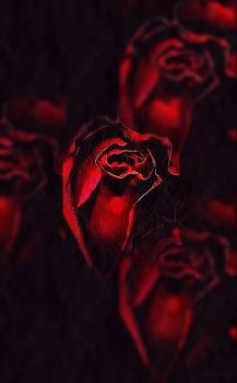 Roses by Marija Djedovic