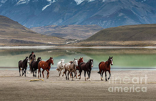 Rounding up the horses V2 by Patti Schulze
