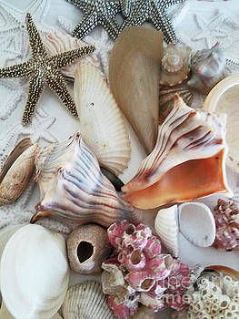 Sharon Williams Eng - Seashell Assortment IV