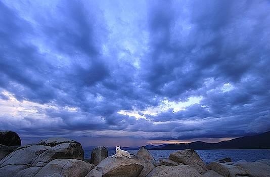 Sekani Storm  by Sean Sarsfield