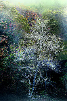 Smoky Mountain Trees by David Chasey