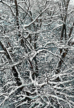 Snow Tree by Nadi Spencer