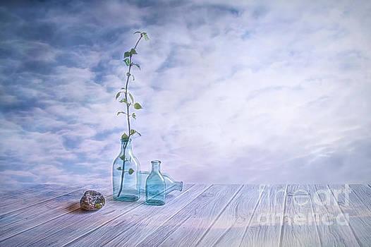 Spring is Coming 2 by Veikko Suikkanen