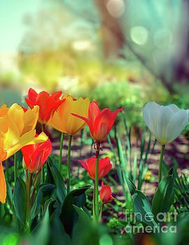 Spring by Susan Warren