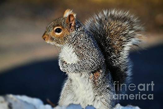 Squirrel  by SoxyGal Photography