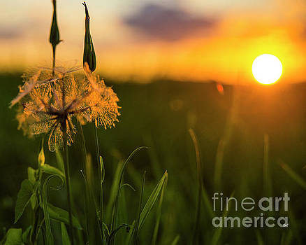 Summer by Alana Ranney