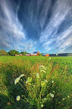 Summer Dreams Drifting Away by Phil Koch